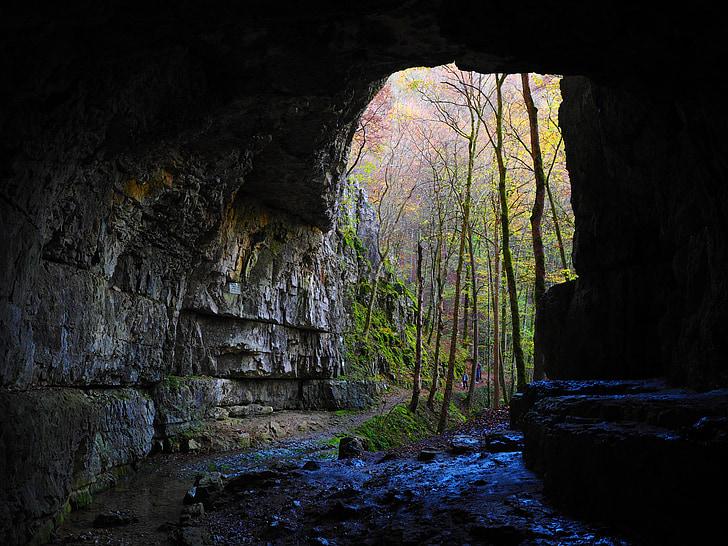 cave entrance near green leaf foresst