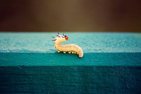 yellow caterpillar on teal concrete surface
