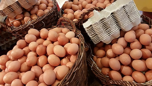 chicken egg lot