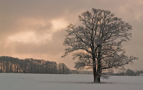 bare tree on ground covered with snow
