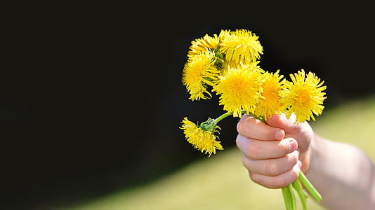 person holding several yellow petaled flowers during daytime