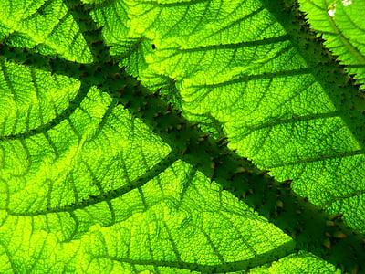 focus photo of green leaf