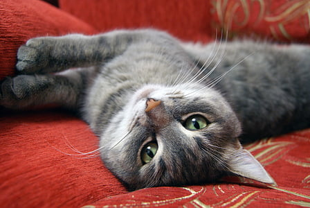 selective focus photography of gray cat on sofa