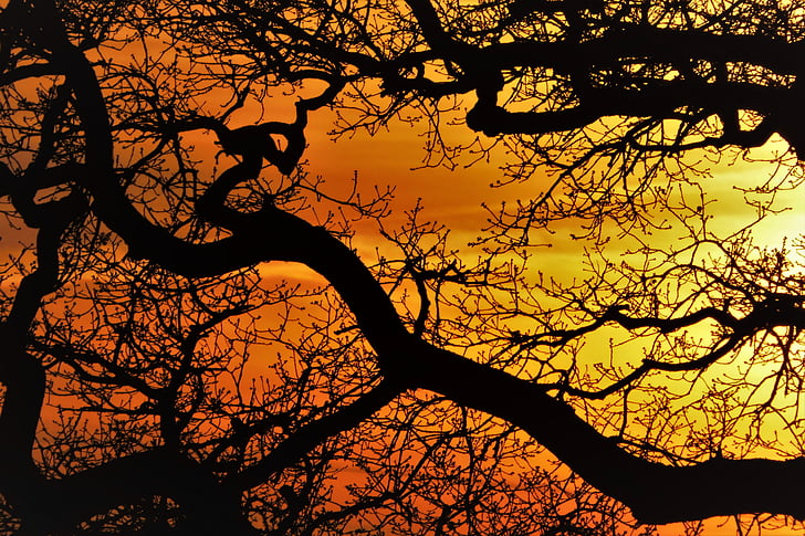 silhouette photography of tree