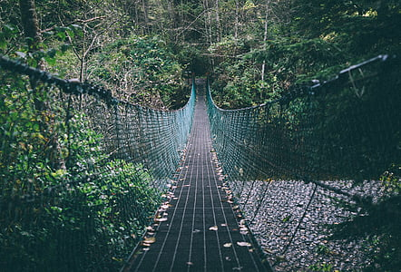 blue hanging bridge surrounded by trees