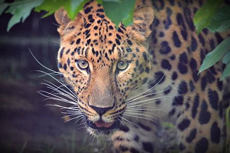 leopard near plant