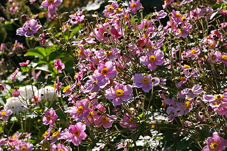 shallow focus photo of purple-and-yellow flowers