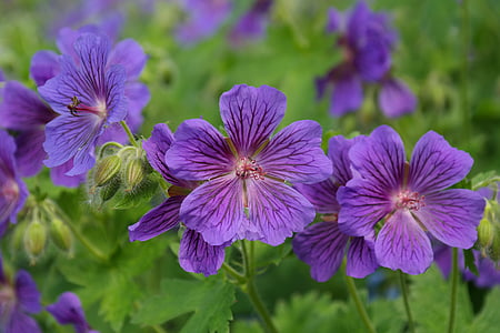 selected focus photo of purple petaled flowers