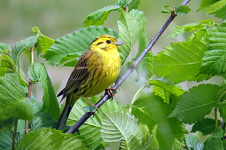 yellow bird perched on branch at daytime