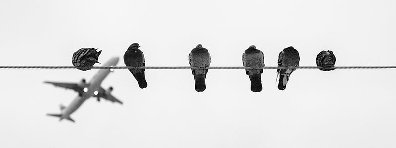 greyscale photo of six pigeons perching on wire