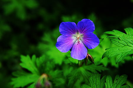 close up photo of purple petaled flower in bloom