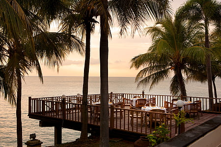 brown wooden deck near palm trees and body of water