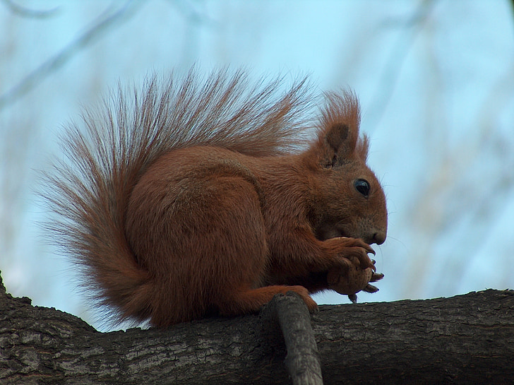 brown squirrel on brown branch