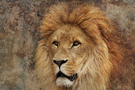 brown lion painting