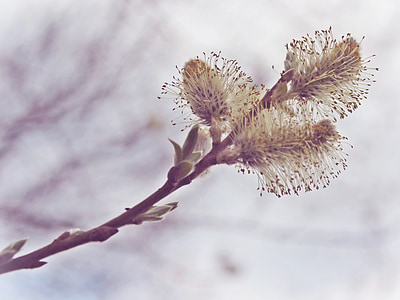 closeup photography of white willow tree flowers