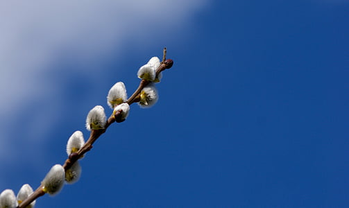 selective focus photography of white cotton tree