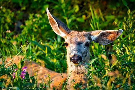 brown deer taken during daytime