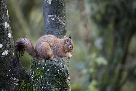 brown squirrel on tree