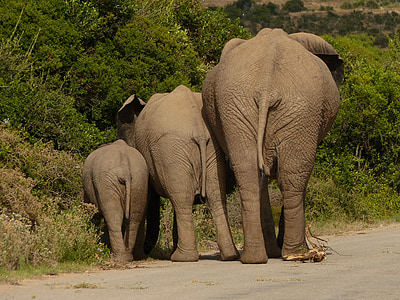 family of three elephants