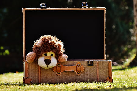 brown lion plush toy in briefcase