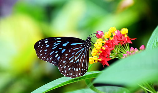 macro photography of butterfly on petaled flower
