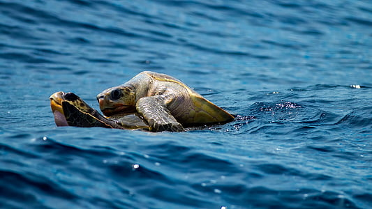 two turtles on body of water during daytime