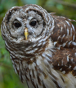 macro photography of brown owl
