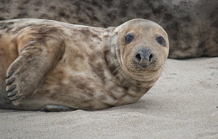 Wildlife photography of sealion