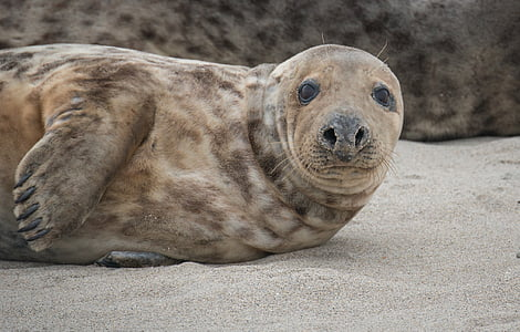 Wildlife photography of sealion