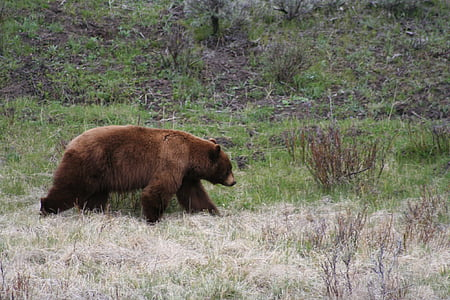 brown bear on green plant field