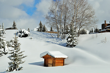 brown and white wooden shed