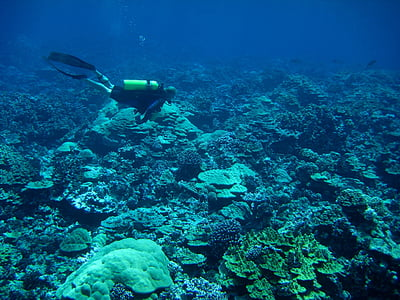 underwater photo of person near the reef