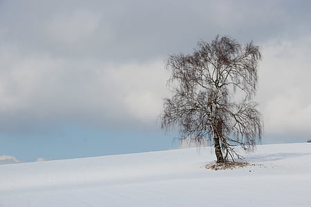 brown bare tree on white snowfield