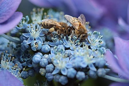 macro photo of blue flowers and honeybees