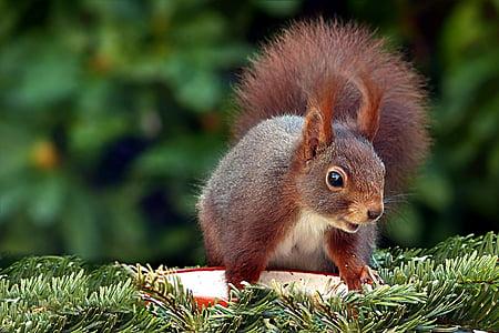 squirrel on grass