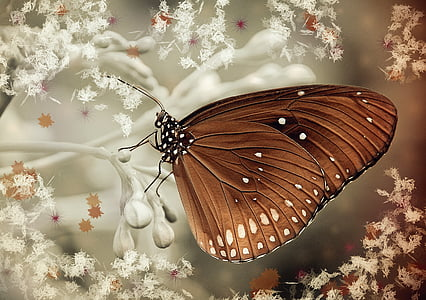 brown butterfly on white flowers