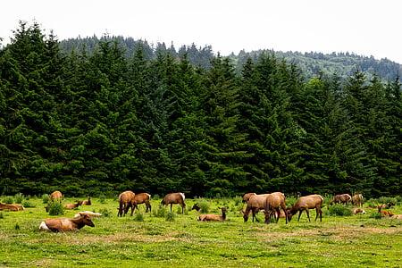 brown animals on green fields