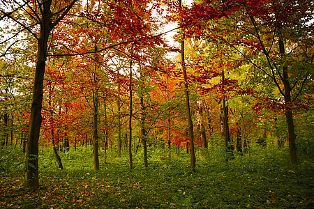 red leafed trees