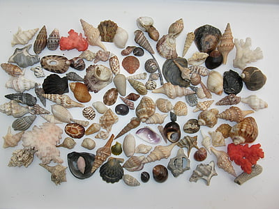 assorted-color sea shells on white wood plank