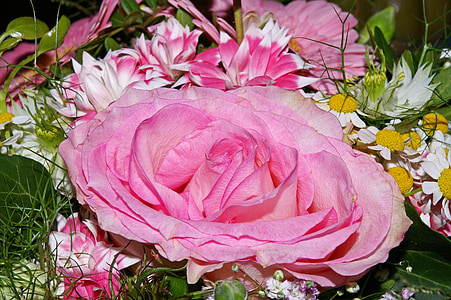 close up photo of pink rose beside white chamomiles