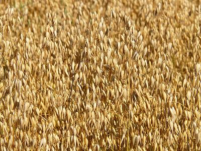 brown grains