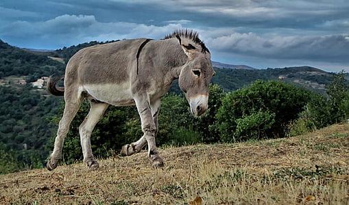 gray donkey on green field