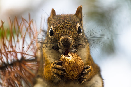 selective focus photography of brown squirrel