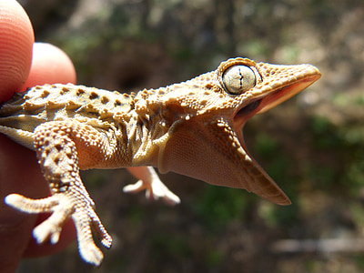 selective focus photography of person holding brown gecko