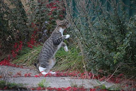 tabby kitten sniffing plant
