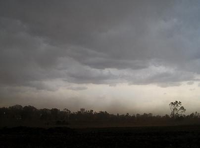 trees under dark clouds