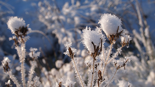 flower covered with snow in shallow focus photography