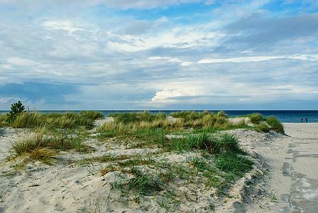 green grass on white sand near beach