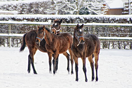 three brown horses on snowfield during daytime