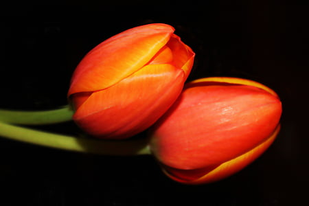 focus photo of two red flowers with black background